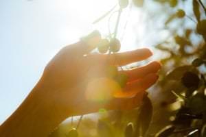 Natural squalane of plant origin